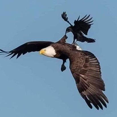 Are you the EAGLE or the CROW?