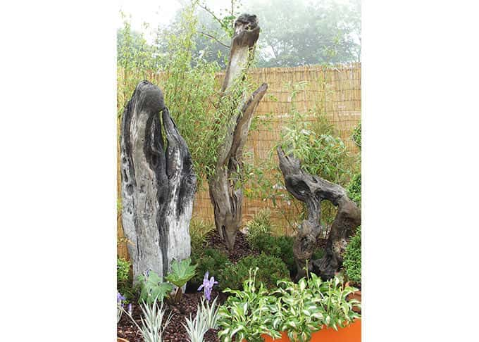 Driftwood sculptured by the forces of nature make striking garden features