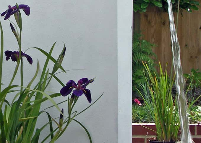 Iris flowers look stunning against a white rendered wall