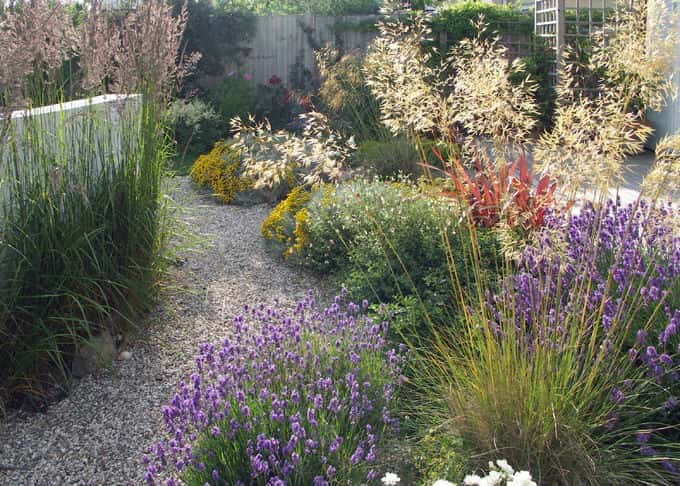 Stabilised gravel paths meander through the beautiful borders