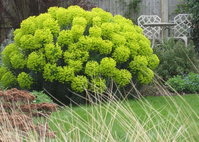 A Euphorbia in all its acid-green glory partially obscures the decked viewing area