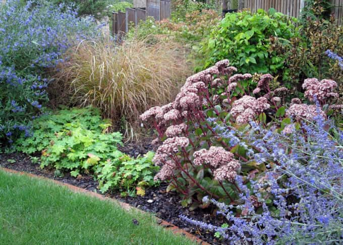 Good plant selection and soil preparation ensures that plants thrive despite the thin chalky soil