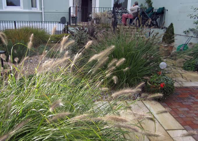 Beautiful grasses are a key element in the seaside planting scheme