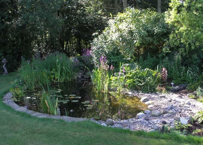 A classic informal garden pond