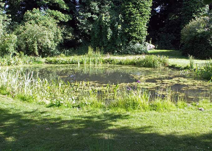 A large natural style pond