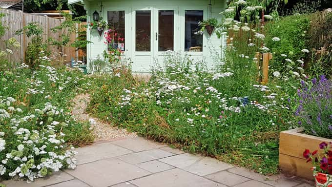 A small garden is transformed by a wild flower meadow