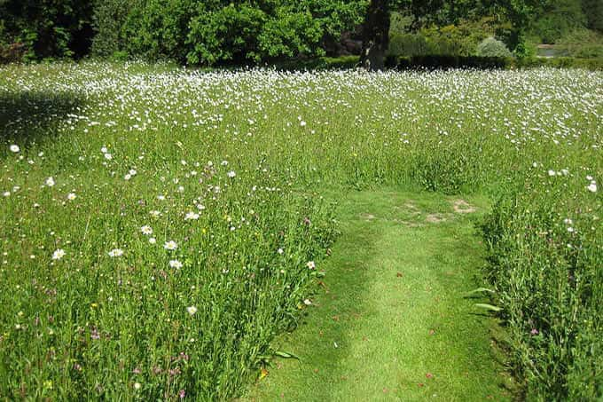 After – A lovely  wildflower meadow