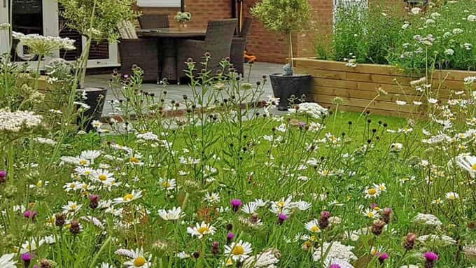 A wild flower meadow brings nature to the door