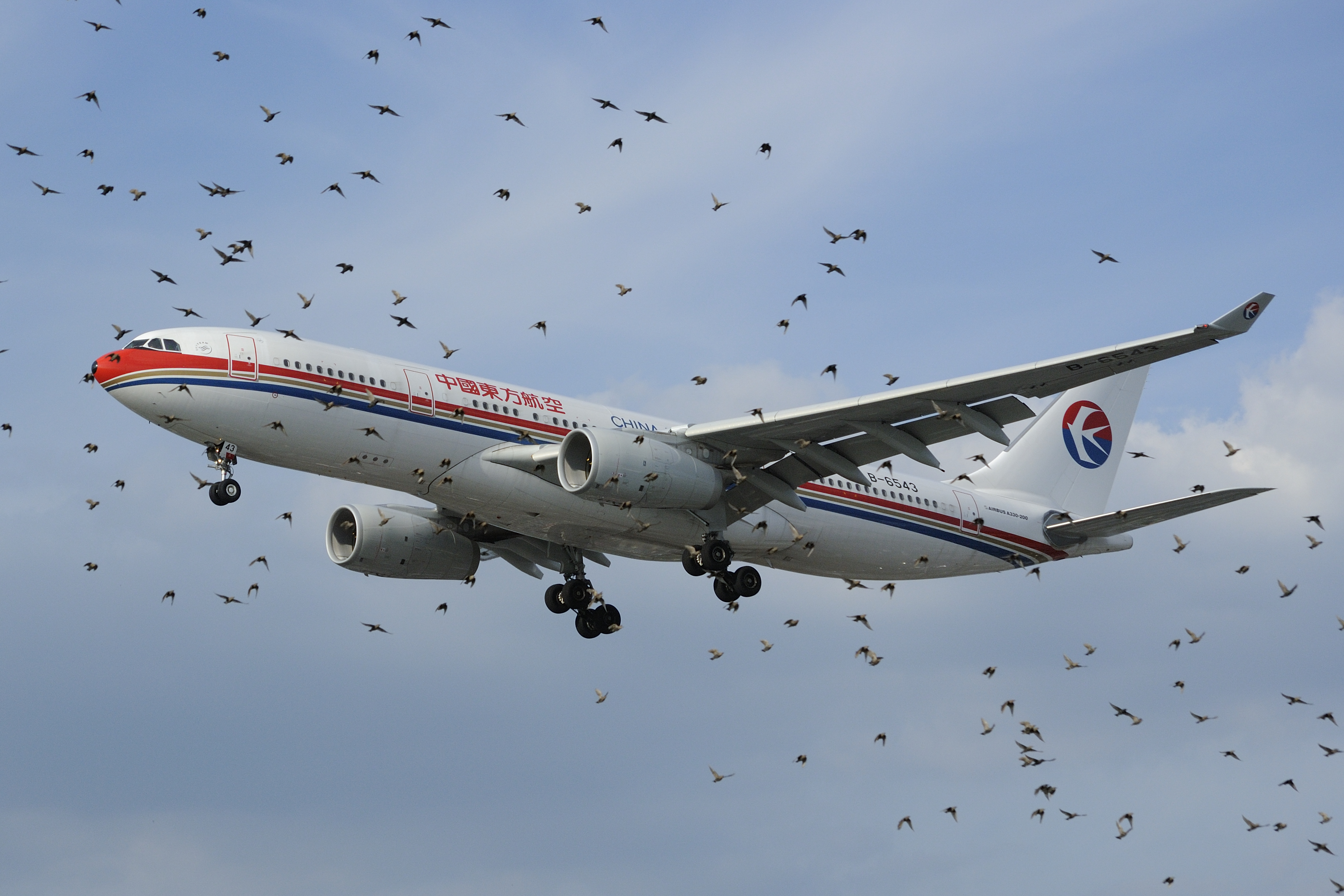 bird scaring services at airports
