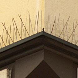 anti bird spike systems