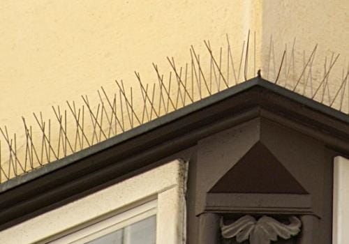 pigeon Bird Spike System