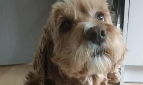 Share the love of dogs with BorrowMyDoggy