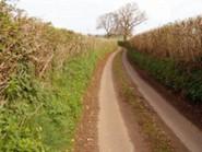 Thumb_medium_country-lane