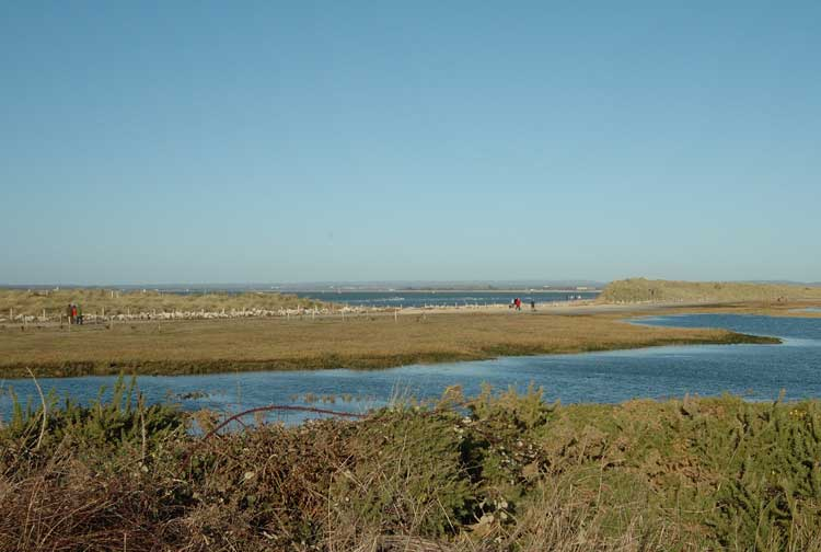 West Wittering Image 43