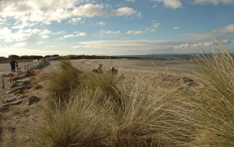 West Wittering Image 24