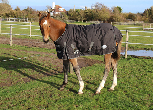 Konig Outdoor Rug 200gsm Polyfill- Small Pony/Foal Sizes