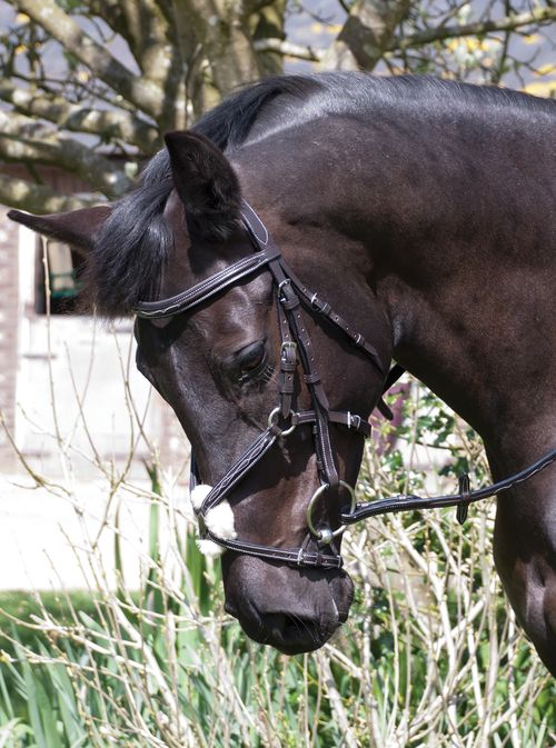 Elegance Mexican Bridle With Reins