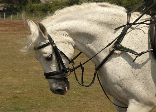5-Point Breastplate
