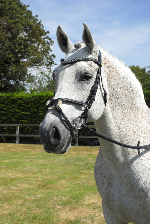 Anatomical Bridle with Mexican Noseband