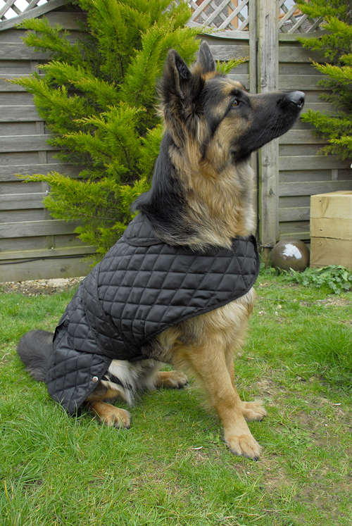 Balmoral Quilted Dog Coat