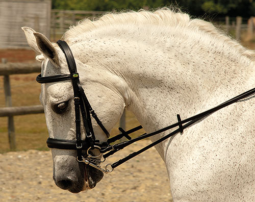 German Leather Comfort Double Bridle
