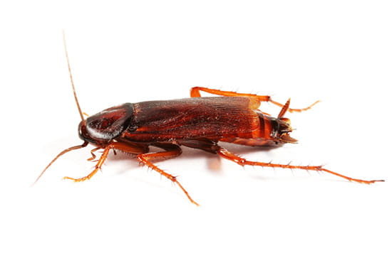 a photo of a cockroach