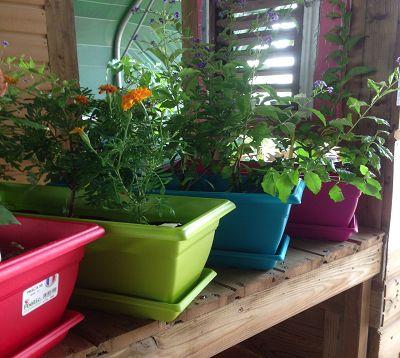 Jardinière  de couleur avec soucoupe