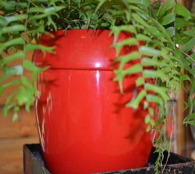 Cache-pot Lolly Pot