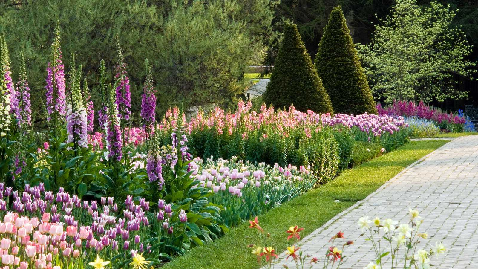 Picture of a Spring Garden