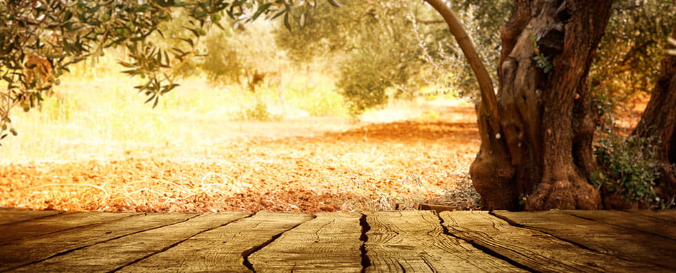 Sunita Fine Foods An Olive Grove