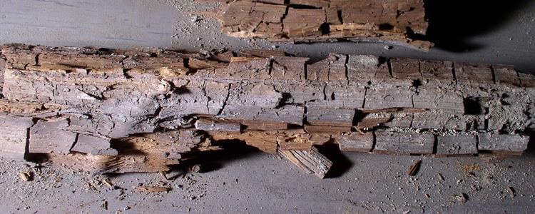 Dry Rot Timber Preservation