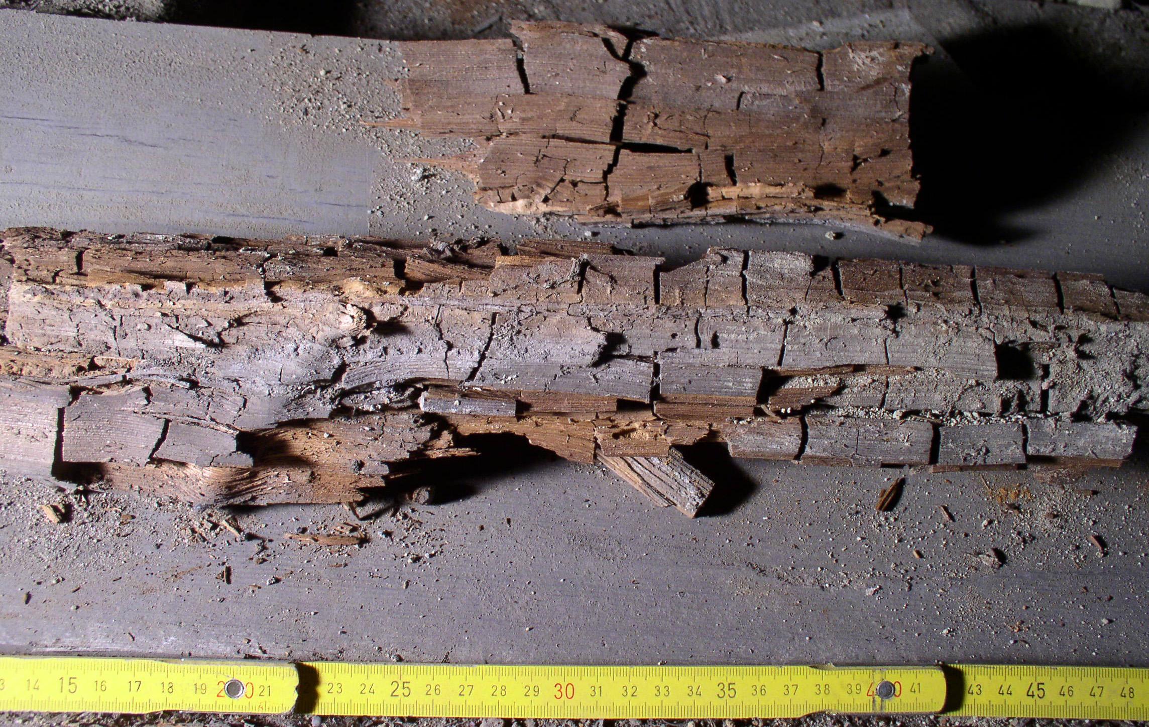 Dry Rot Damaged Wood