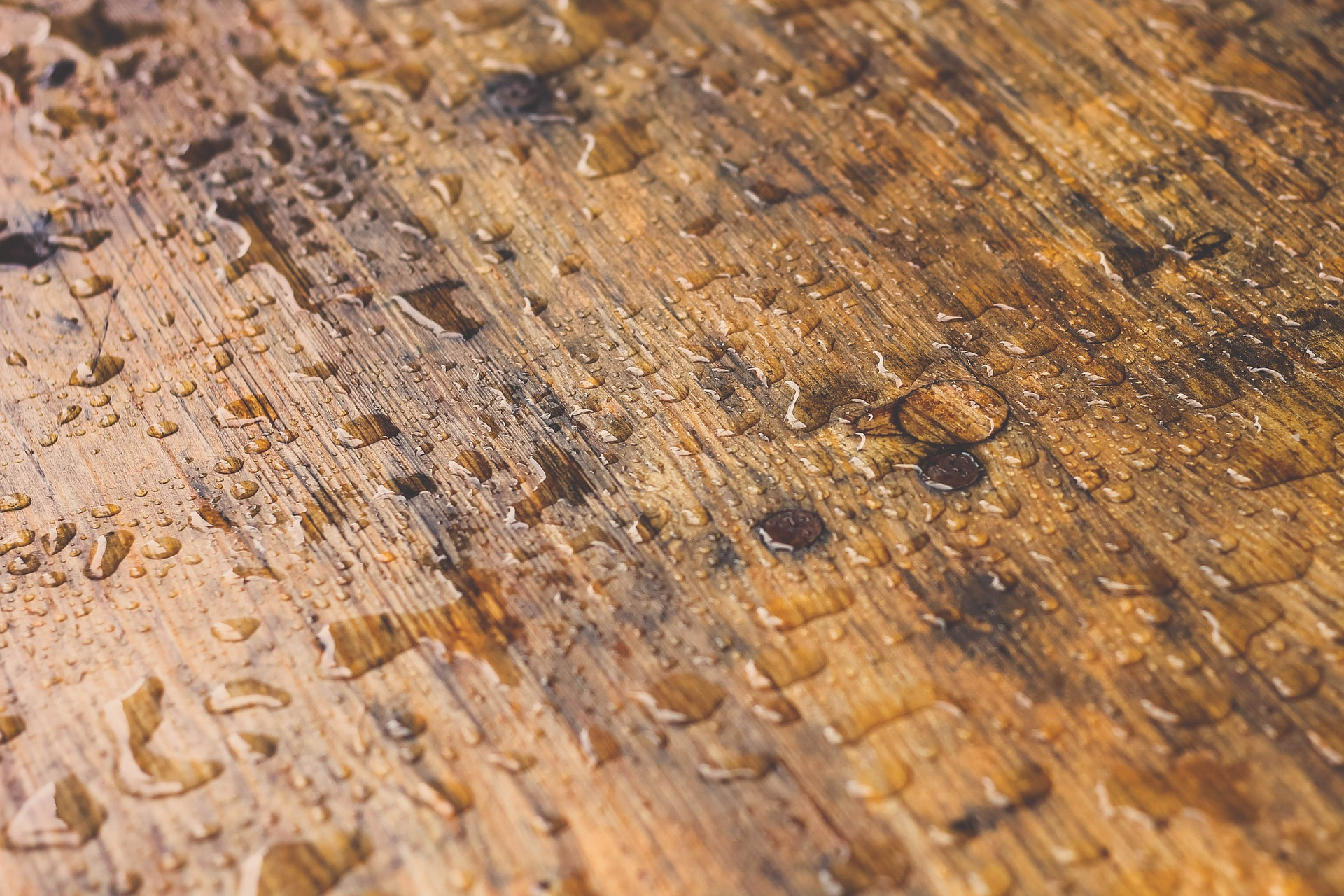 Picture of Wet Timber