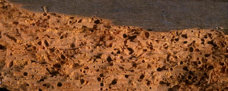 Timber and Woodworm Treatment