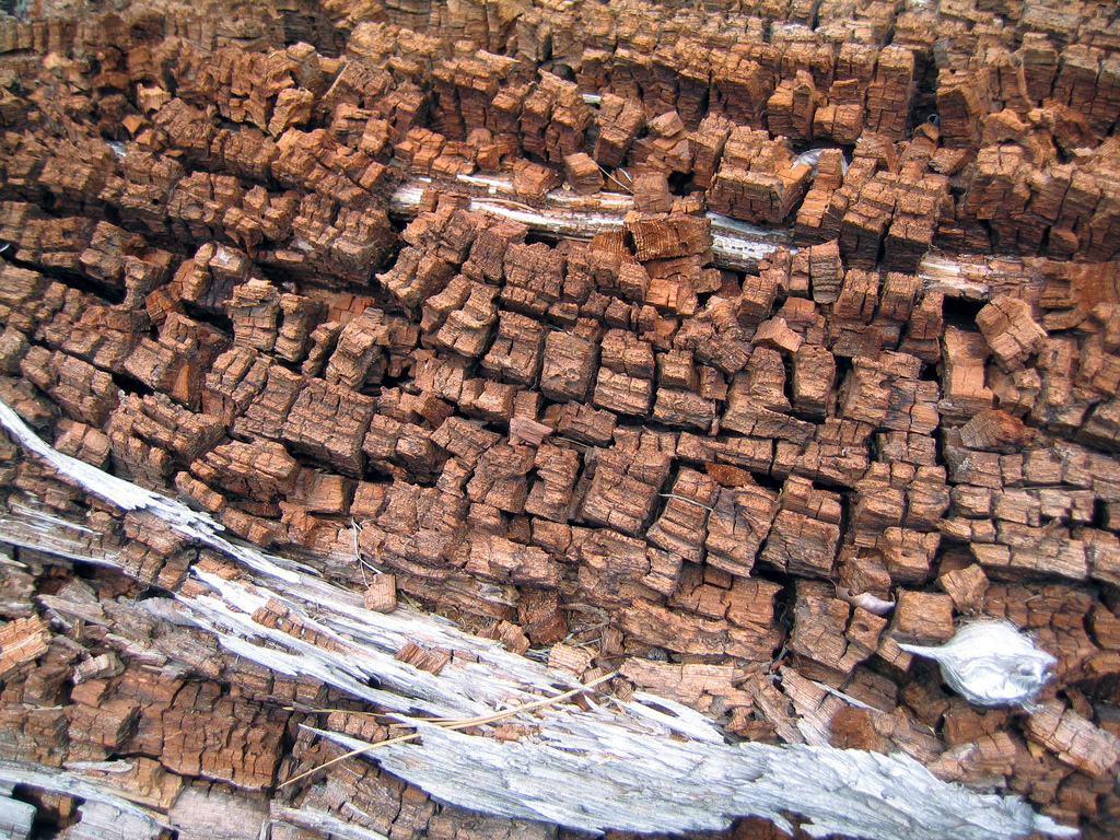 Wet Rot and Dry Rot