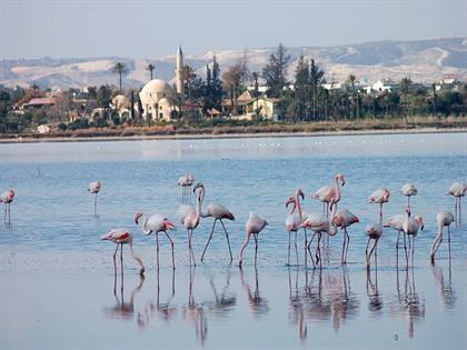 Larnaca SaltLake
